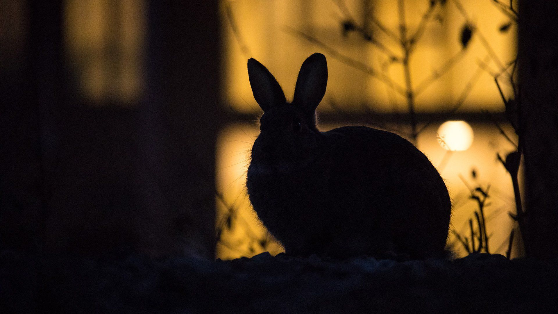 A silhouette of a rabbit against an urban backdrop.